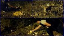 Tuzla'da Zabıta Memurları, Her Akşam Yemeklerini Yavru Tilkilerle Bölüşüyor